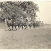 History Mystery Photo #10 East of Heyworth was the location of an annual horse fair. If you have any information or memorabilia of these events please let us know, and share copies with the library.